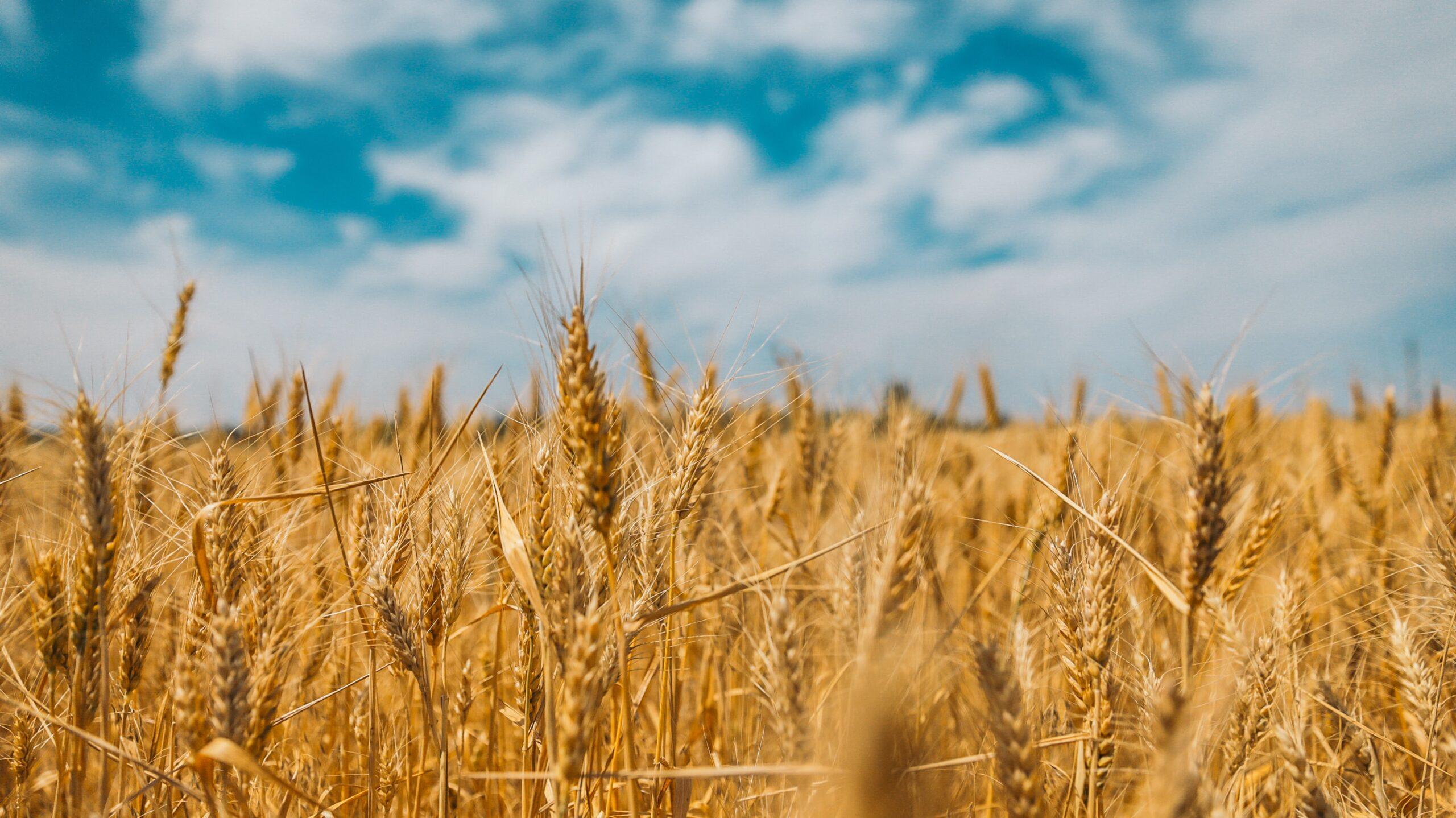 Conservação de grãos: 7 dicas para a armazenagem correta